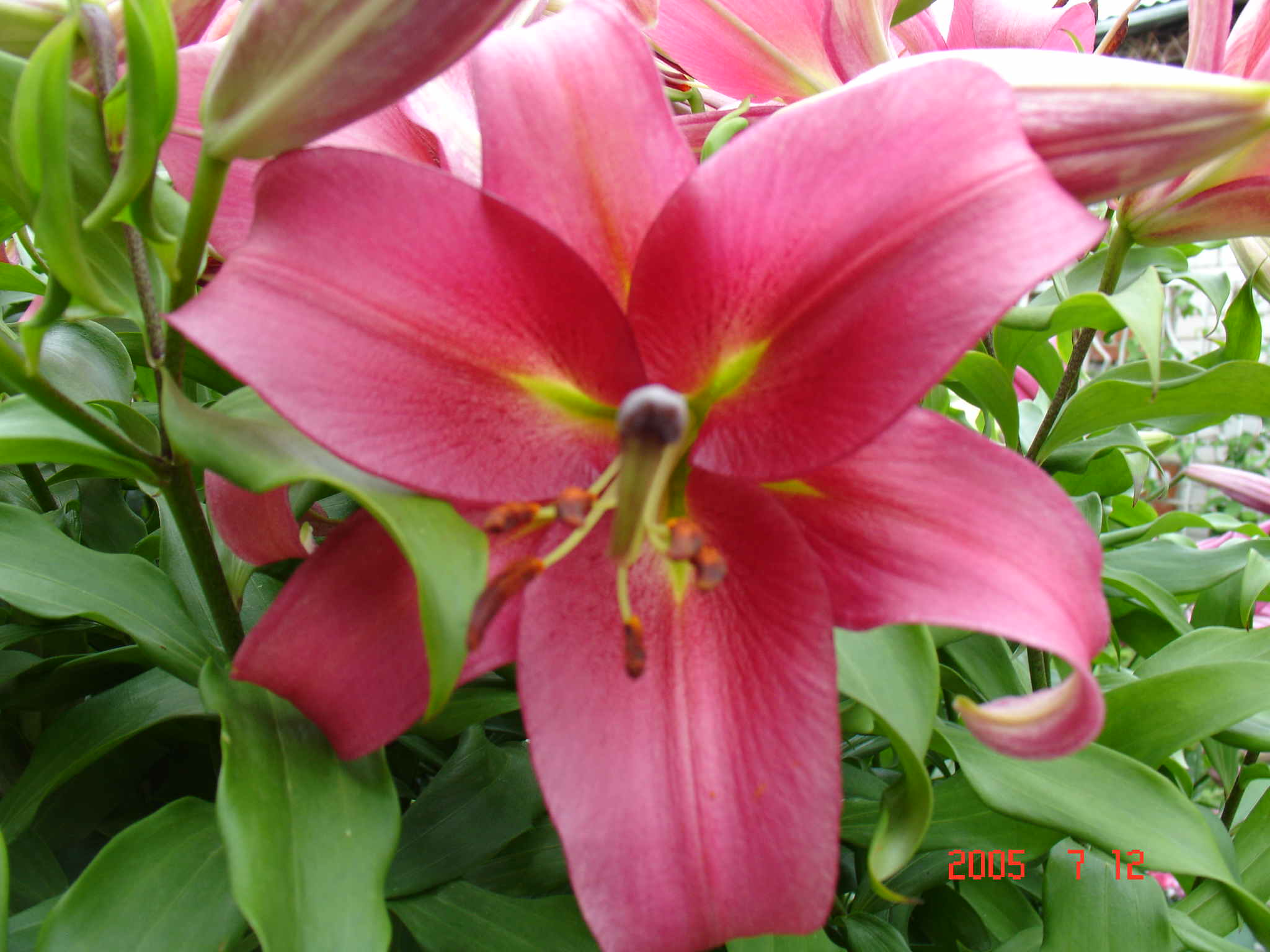 Фотографии садовых растений в саду